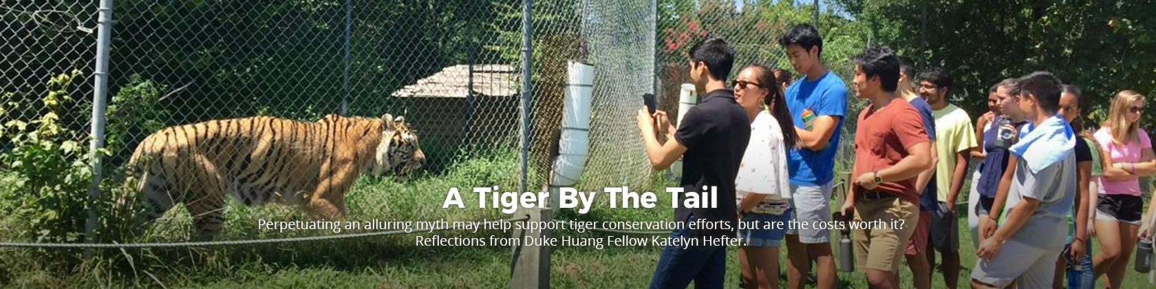 banner-tiger-by-tail
